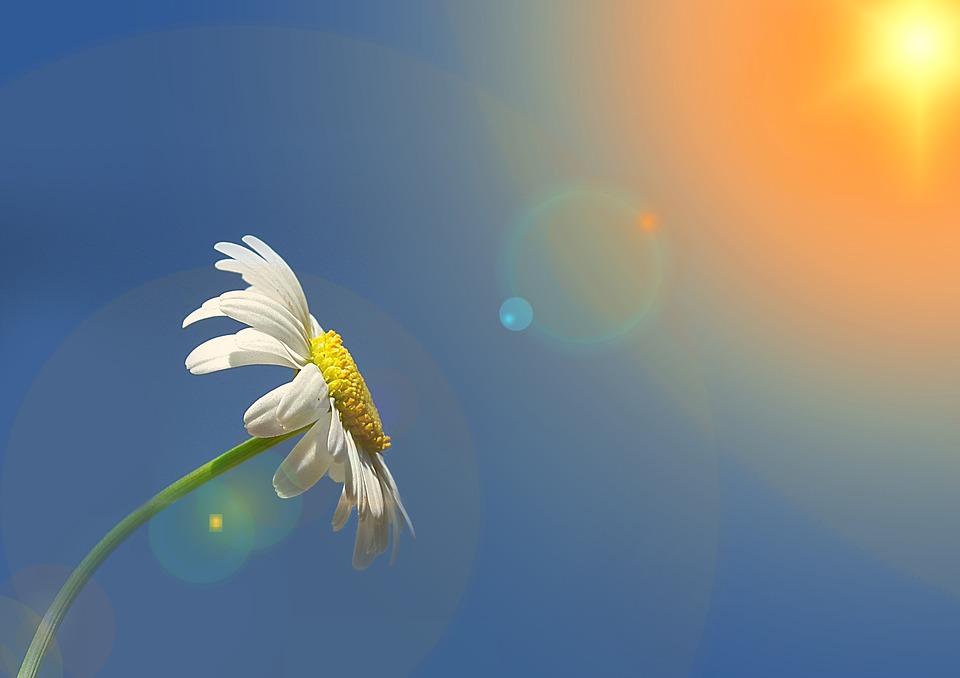romashka i solnce